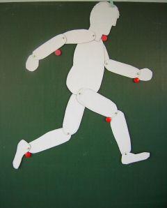 Outils pour la classe le corps et les articulations - Comment faire un bras articule ...